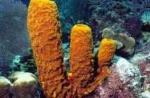 30_Orange_Sponge