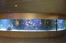 deniz-akvaryum-galeri-(1)