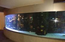 deniz-akvaryum-galeri-(10)