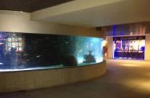 deniz-akvaryum-galeri-(11)