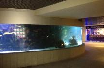 deniz-akvaryum-galeri-(12)