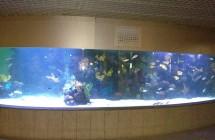 deniz-akvaryum-galeri-(2)
