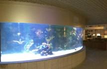 deniz-akvaryum-galeri-(3)