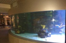 deniz-akvaryum-galeri-(4)