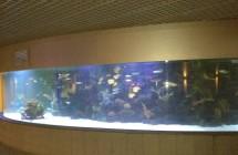 deniz-akvaryum-galeri-(6)