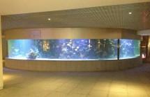 deniz-akvaryum-galeri-(7)