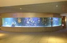 deniz-akvaryum-galeri-(8)