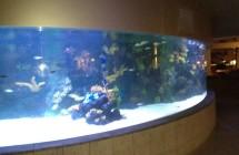 deniz-akvaryum-galeri-(9)